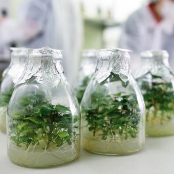 健康種苗培育